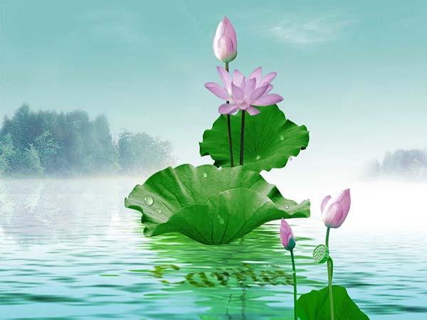 Mơ thấy hoa sen - Ngủ mơ thấy hoa sen báo hiệu điều gì
